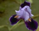 bloemen_377