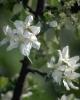 bloemen_379