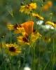 bloemen_380