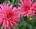 bloemen_381