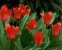 bloemen_382