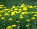 bloemen_384