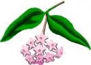 bloemen_385