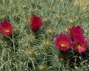 bloemen_387