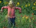 bloemen_388