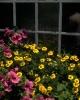 bloemen_389