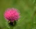 bloemen_390