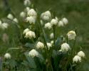bloemen_391