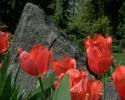 bloemen_392