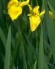 bloemen_393