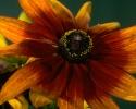 bloemen_395