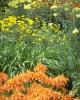 bloemen_399