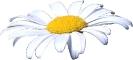 bloemen_3