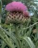bloemen_400