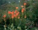 bloemen_401