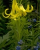 bloemen_402