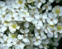 bloemen_404