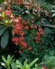 bloemen_405