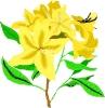 bloemen_407