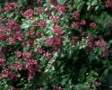 bloemen_408