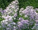 bloemen_409