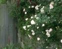 bloemen_410