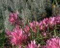 bloemen_411