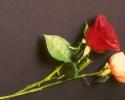 bloemen_412