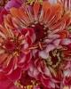 bloemen_413