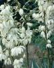 bloemen_414