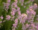 bloemen_417