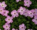 bloemen_419