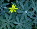 bloemen_420
