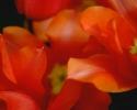bloemen_422