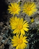 bloemen_423