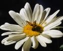 bloemen_424