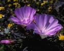bloemen_425