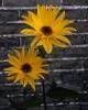 bloemen_426