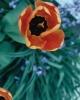 bloemen_430