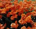 bloemen_431
