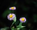 bloemen_433
