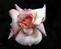 bloemen_434