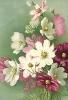 bloemen_442