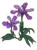 bloemen_461