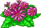 bloemen_462