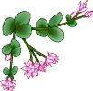bloemen_466