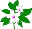 bloemen_467