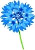 bloemen_469
