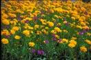 bloemen_475