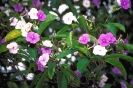 bloemen_476
